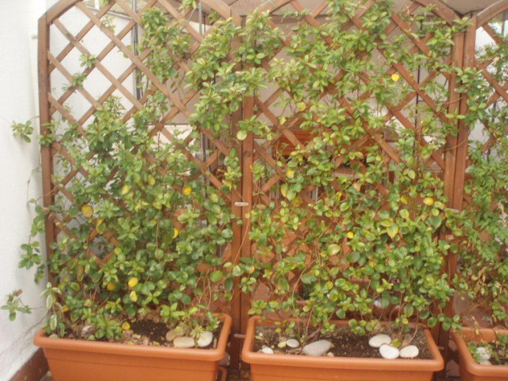 Celosias metalicas para jardin good celosias metalicas for Celosias para jardin