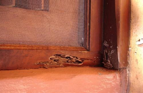 Consejos para prevenir el ataque de las termitas