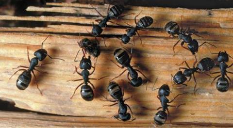 Cómo proteger la madera del ataque de hongos e insectos