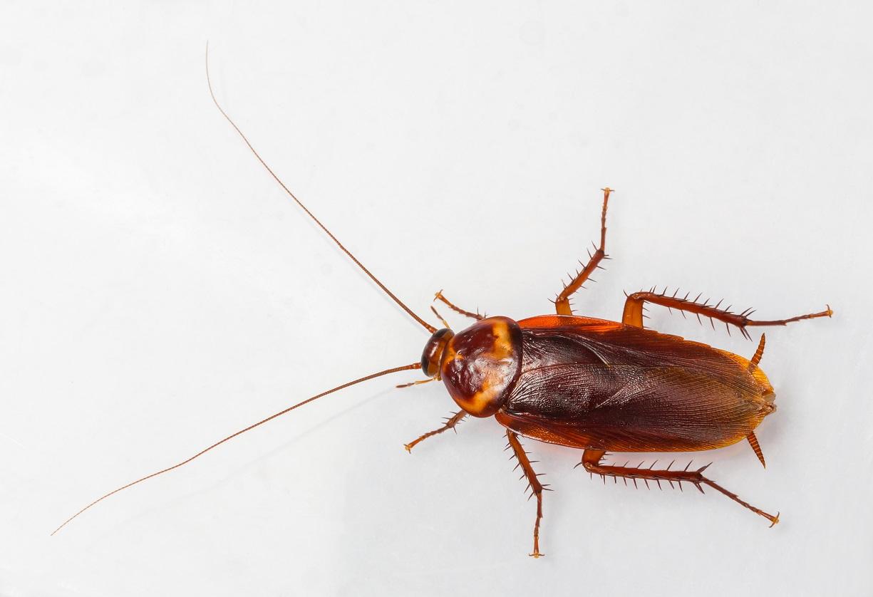 Como evitar la presencia de cucarachas en casa