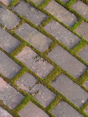 Cómo remover musgo en caminos de ladrillos o cemento