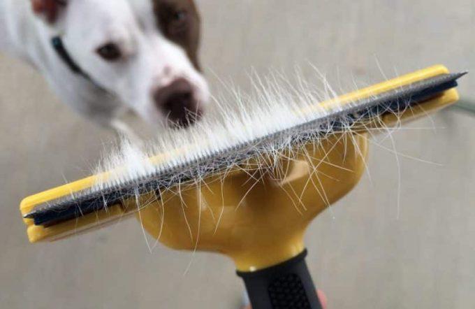 Cómo mantener una casa libre del pelo de las mascotas