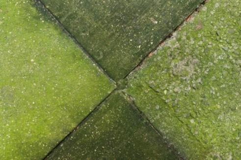 Cómo eliminar el musgo de las superficies de cemento