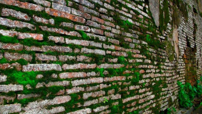 Cómo eliminar el musgo y el moho de una pared de ladrillos