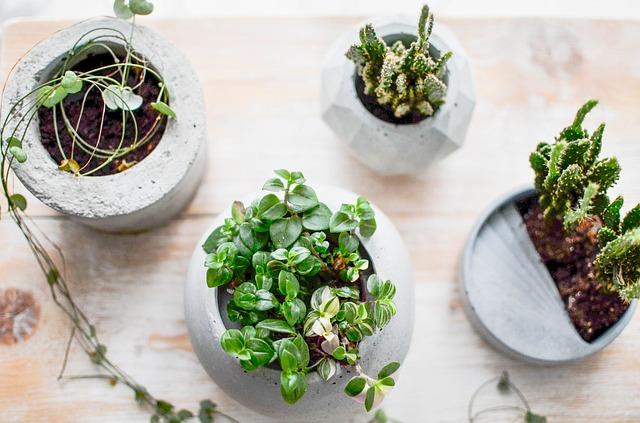 Macetas de Cemento, Hobbie y Miniemprendimiento Durante la Cuarentena